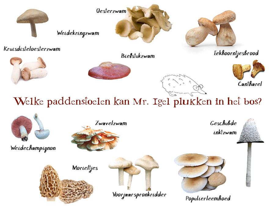 Overzicht eetbare paddenstoelen