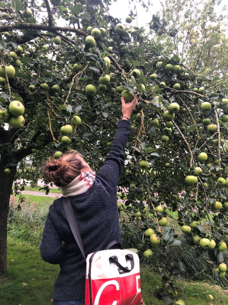 Gertrude appels plukken